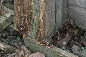 barn wood rotting