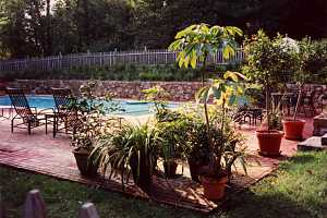 a brick patio around a pool area with several planters and patio furniture scattered around it