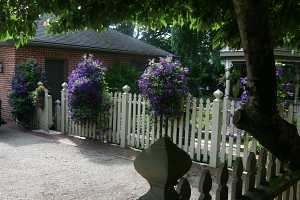purple clematis planters on a white picket fence