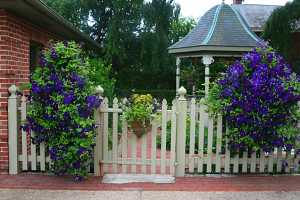 two clematis planters on a white picket fence and a smaller planter on the door