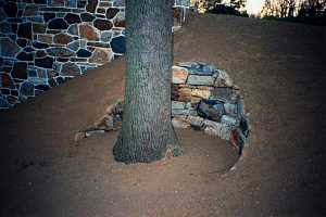 a stone retaining wall on a dirt hill keeping an open area for a tree trunk