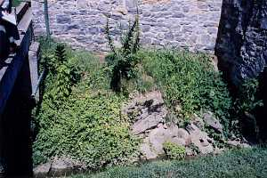 a stone retaining wall behind an overgrown area of groundcover and weeds - before