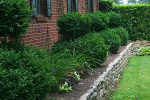 topiaries in a planting bed surrounded by a stone retaining wall